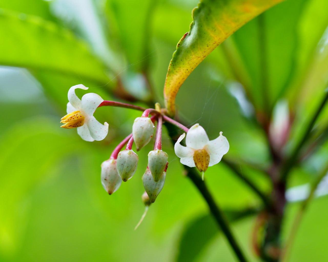 少林山境内で撮れた花や虫_c0305565_17431130.jpg
