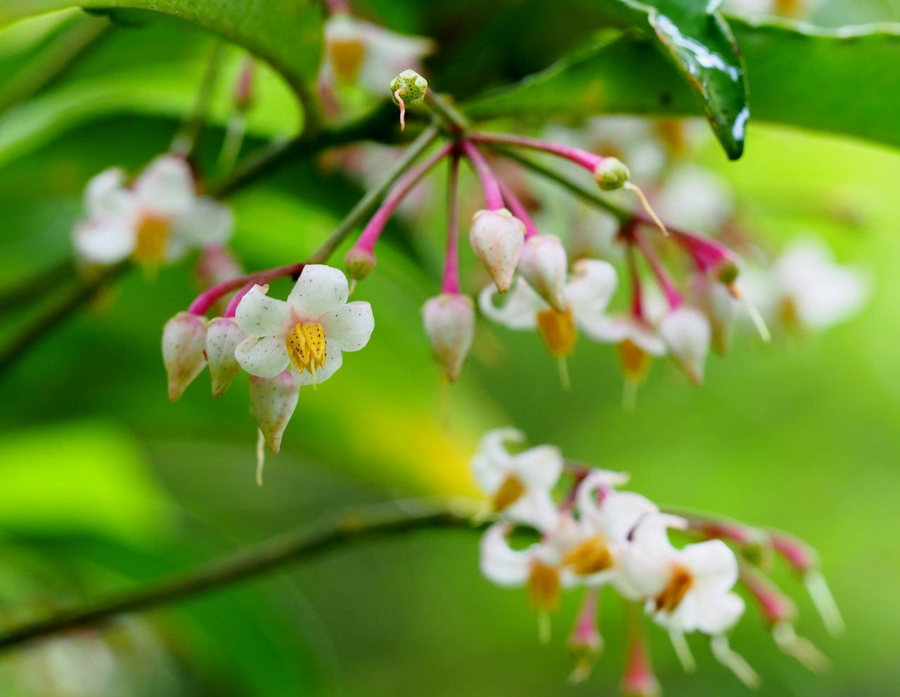 少林山境内で撮れた花や虫_c0305565_17434152.jpg
