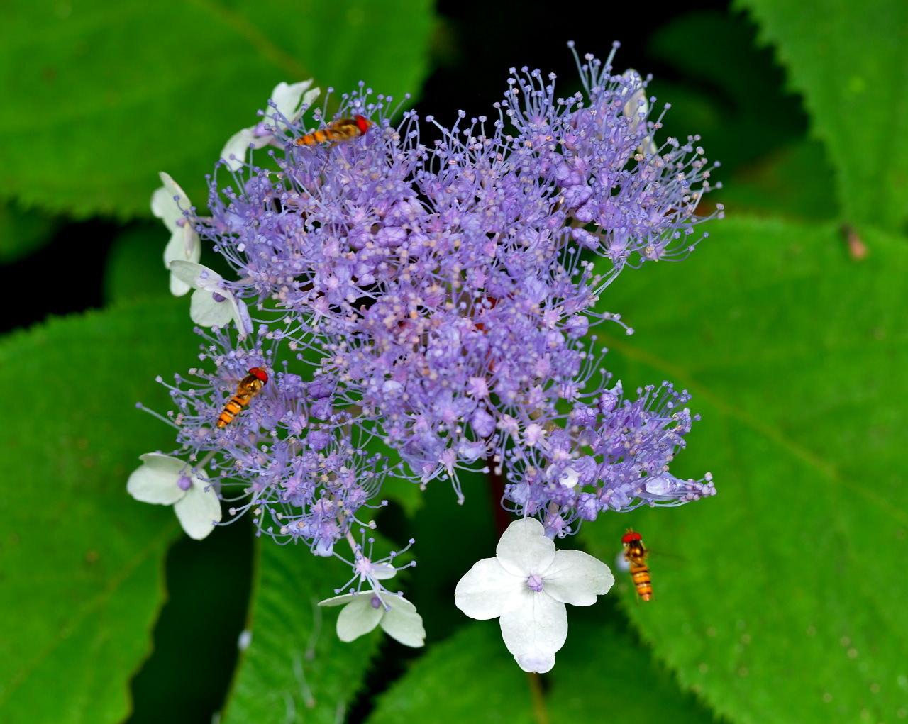 少林山境内で撮れた花や虫_c0305565_17441731.jpg