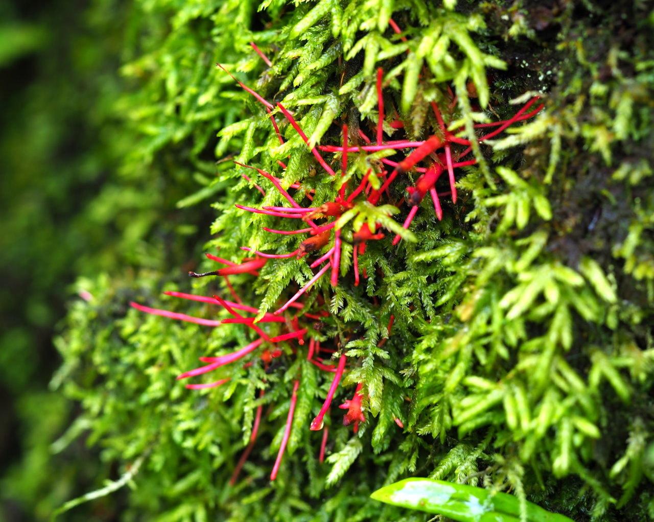 少林山境内で撮れた花や虫_c0305565_17444644.jpg