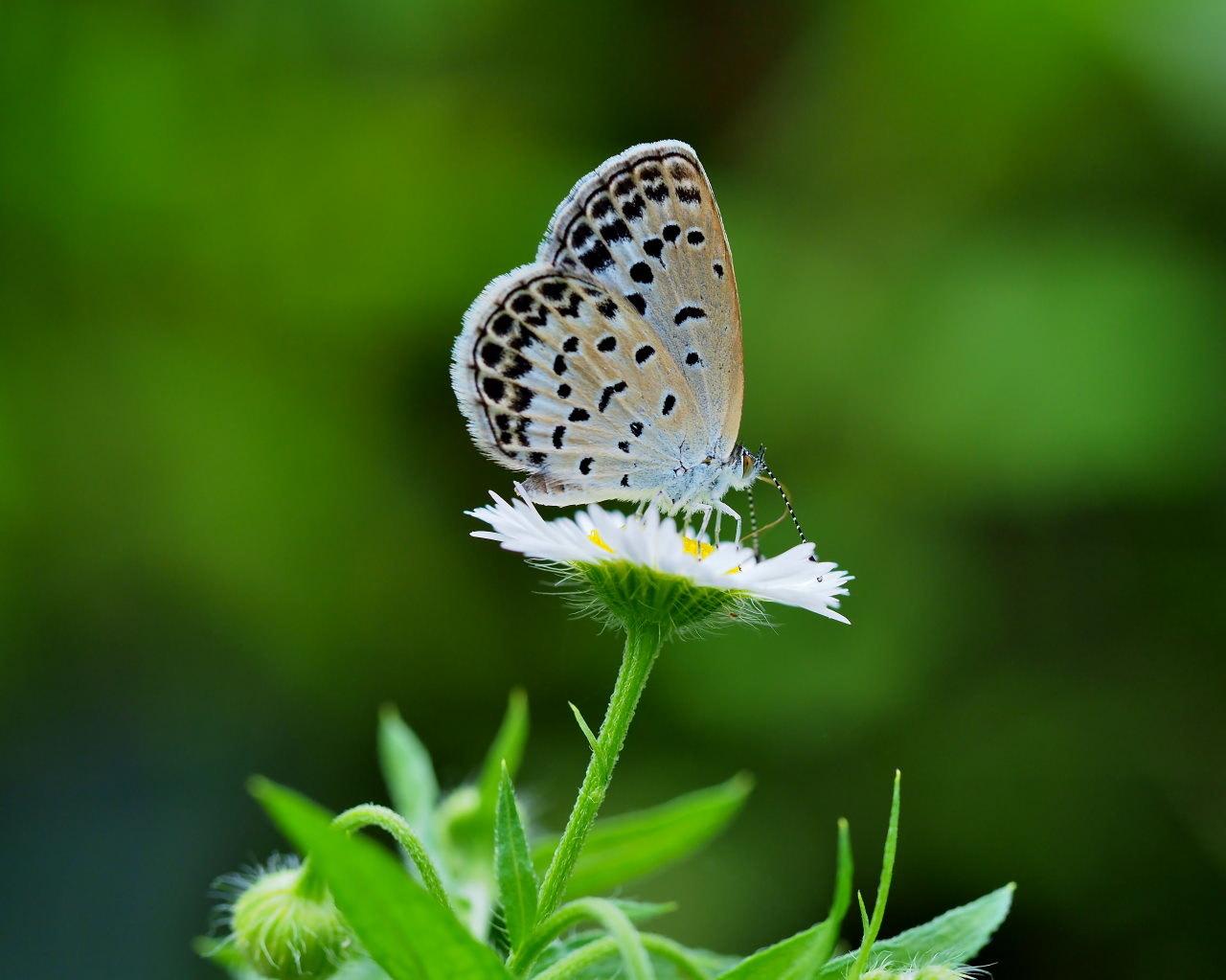 少林山境内で撮れた花や虫_c0305565_17452429.jpg