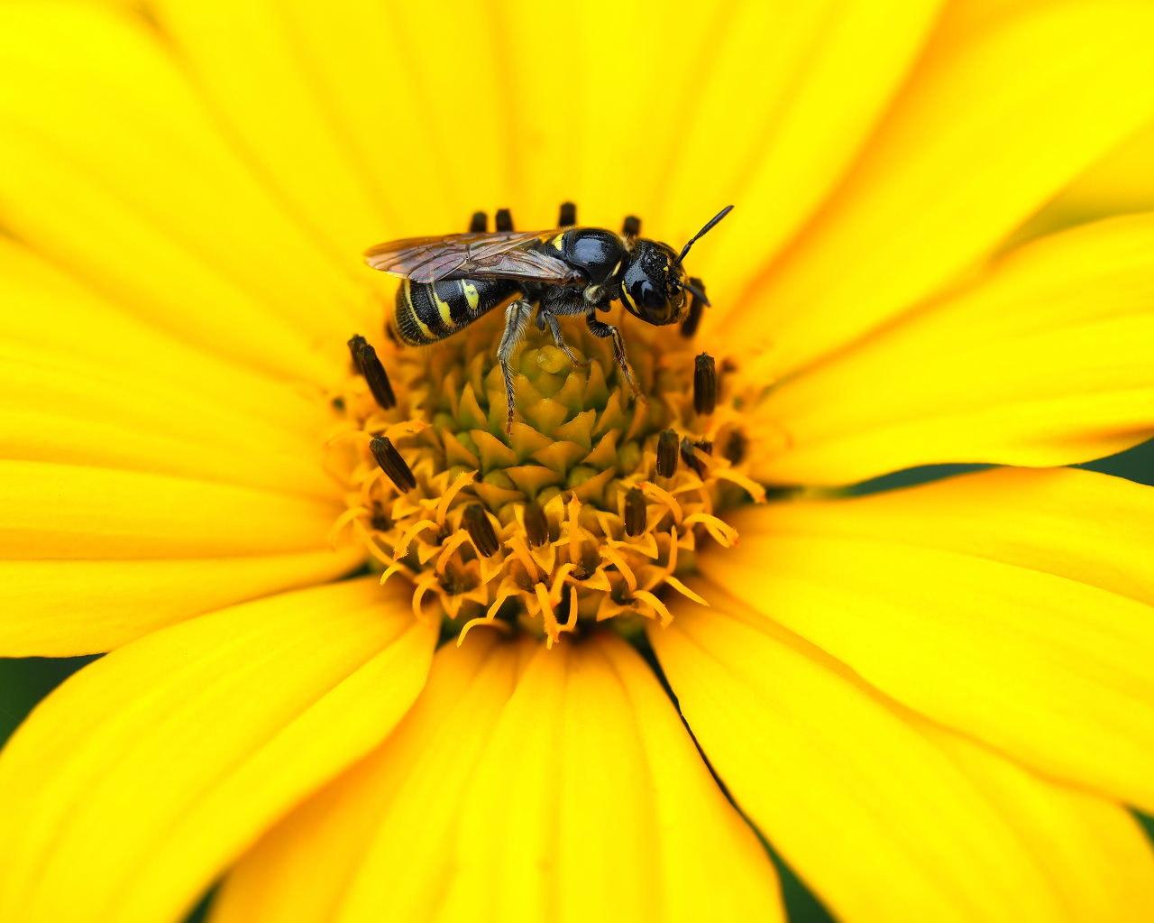 少林山境内で撮れた花や虫_c0305565_17460139.jpg