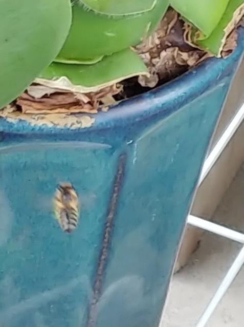 鉢に巣を作るつもり?_c0162773_19260507.jpg
