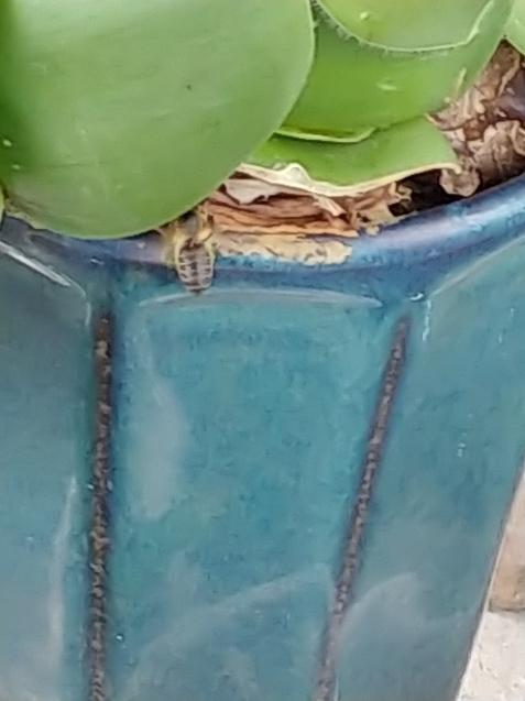 鉢に巣を作るつもり?_c0162773_19263806.jpg