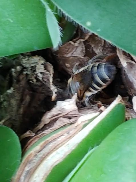 鉢に巣を作るつもり?_c0162773_19281465.jpg