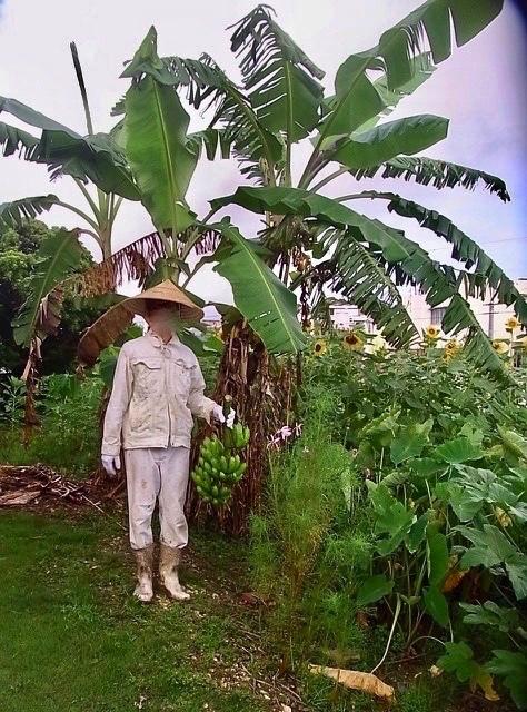 バナナの成長_e0158687_17180855.jpg