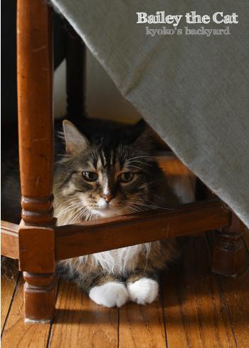 爪切りとブラシを見せたときの猫の反応_b0253205_10103317.jpg