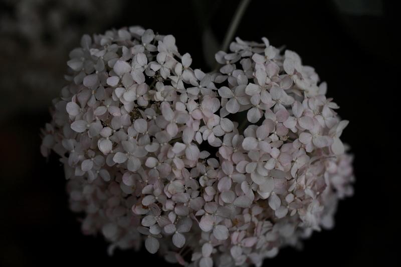 絹の花_e0169421_21403825.jpg