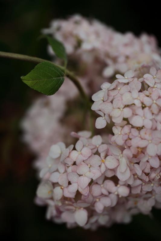 絹の花_e0169421_21403982.jpg