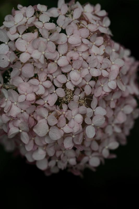 絹の花_e0169421_21404087.jpg