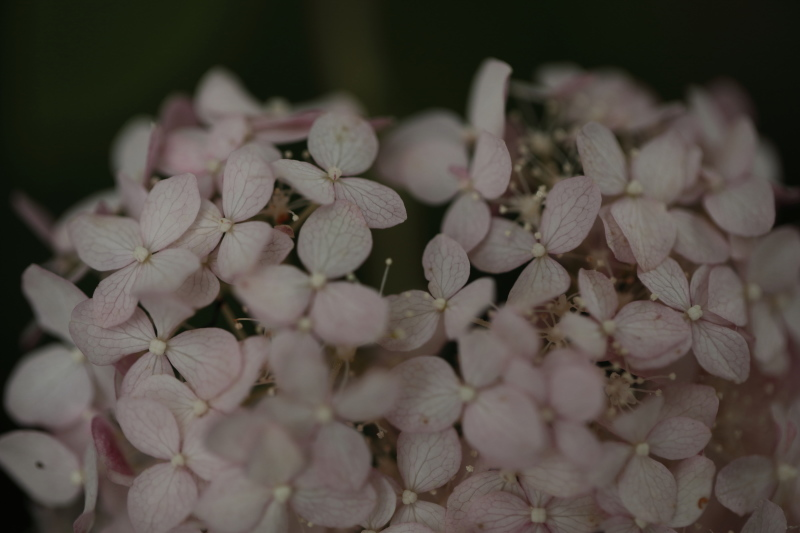 絹の花_e0169421_21490755.jpg