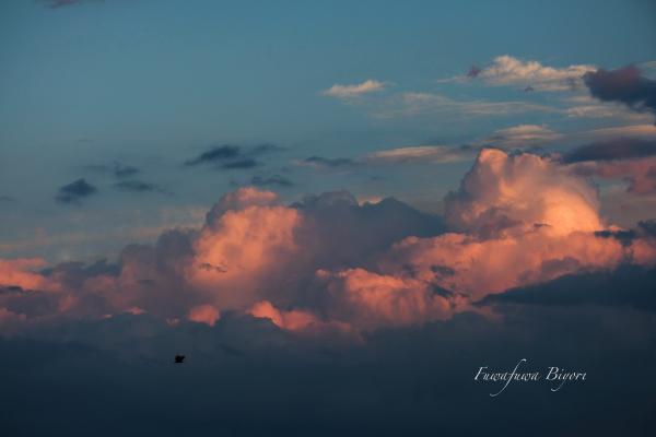 今日の夕景 **_d0344864_19580075.jpg
