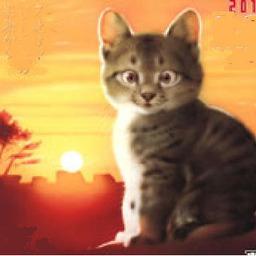 《 8月の 思い出 猫さん 》_c0328479_14190284.jpg