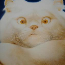 《 8月の 思い出 猫さん 》_c0328479_14194945.jpg