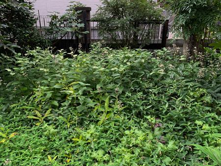 8月の庭 2020_f0239100_22205612.jpg