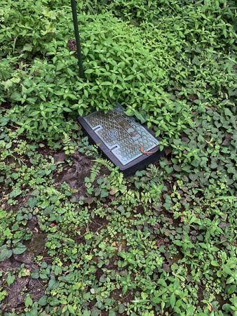 8月の庭 2020_f0239100_22414921.jpg