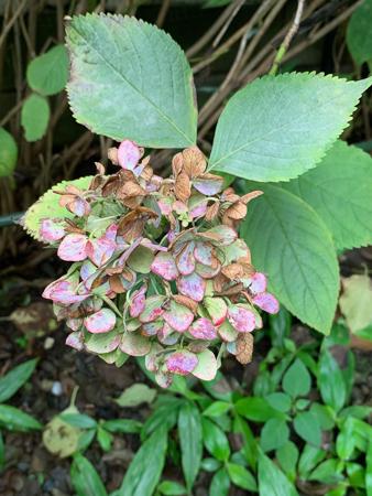8月の庭 2020_f0239100_22523458.jpg