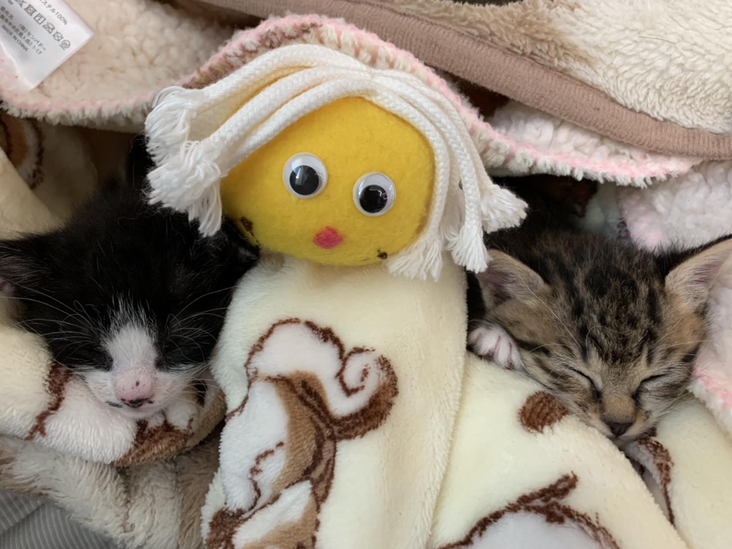 トライアル順調と、子猫の仮名決定_e0144012_22455725.jpg