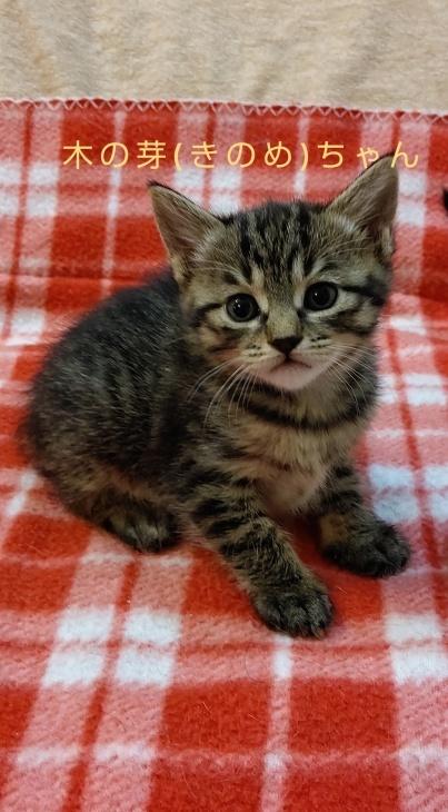 トライアル順調と、子猫の仮名決定_e0144012_23083291.jpeg