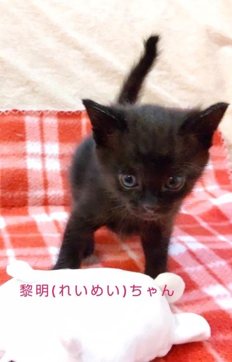 トライアル順調と、子猫の仮名決定_e0144012_23091036.jpeg