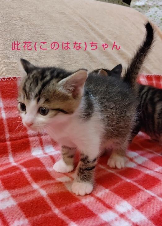 トライアル順調と、子猫の仮名決定_e0144012_23093387.jpeg