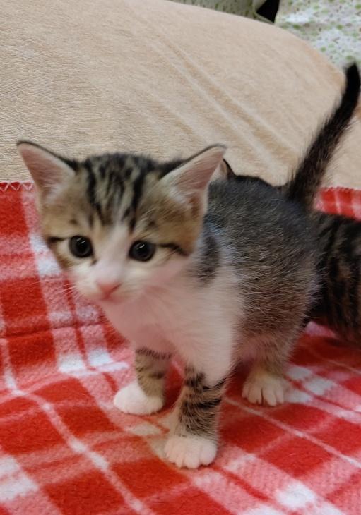 トライアル順調と、子猫の仮名決定_e0144012_23100775.jpeg
