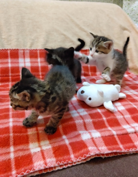 トライアル順調と、子猫の仮名決定_e0144012_23161008.jpeg