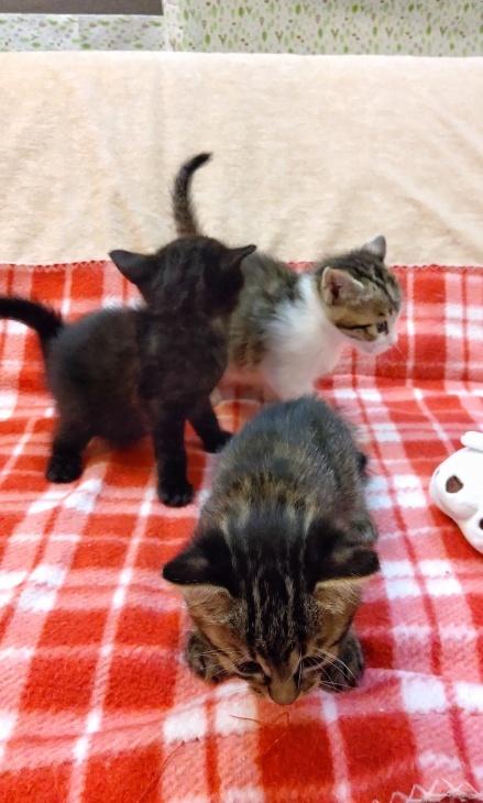 トライアル順調と、子猫の仮名決定_e0144012_23163291.jpeg