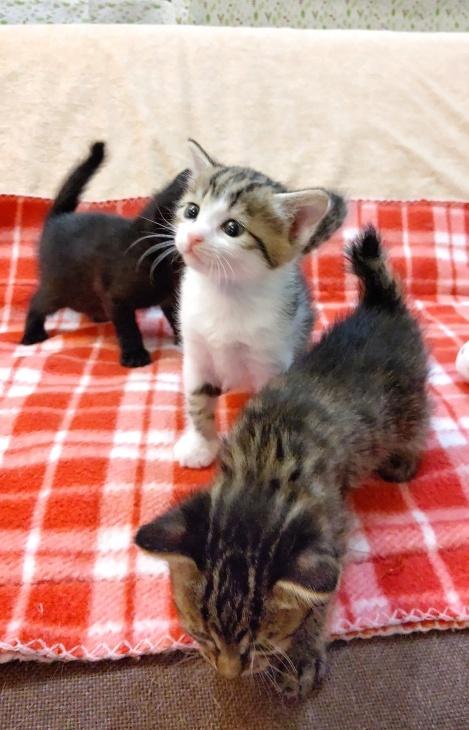 トライアル順調と、子猫の仮名決定_e0144012_23165399.jpeg