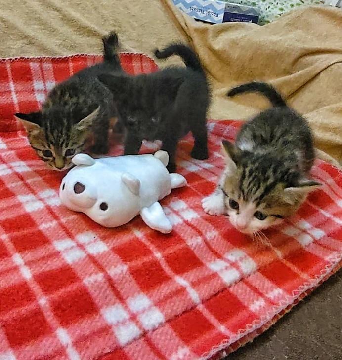 トライアル順調と、子猫の仮名決定_e0144012_23290446.jpeg