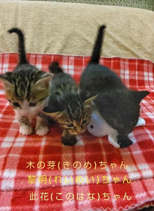 トライアル順調と、子猫の仮名決定_e0144012_23333223.jpeg