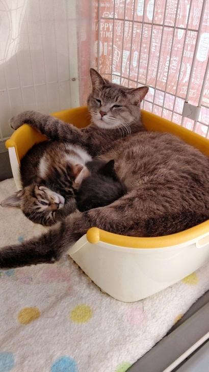 トライアル順調と、子猫の仮名決定_e0144012_23393827.jpeg