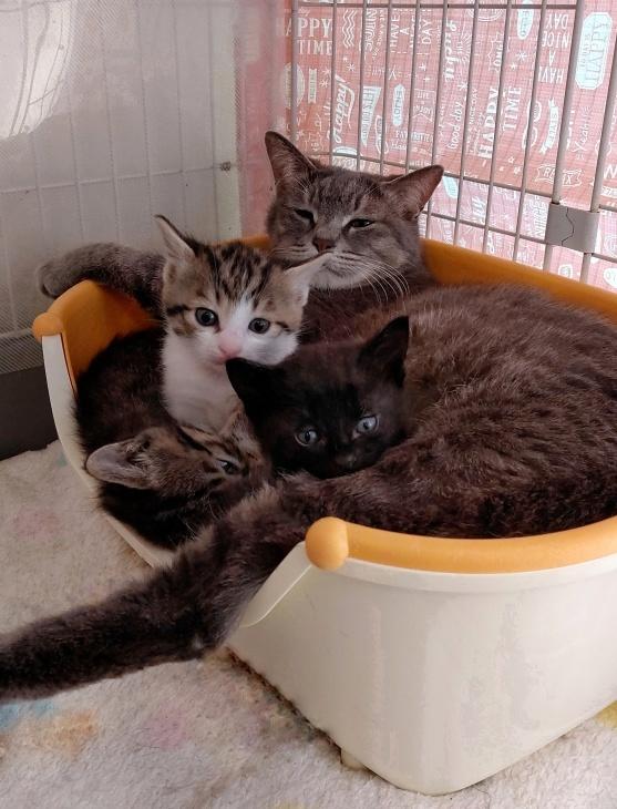 トライアル順調と、子猫の仮名決定_e0144012_23402478.jpeg