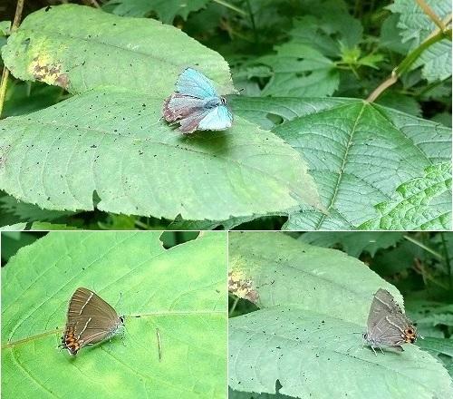 7月中旬の蝶とか_c0048117_11333010.jpg