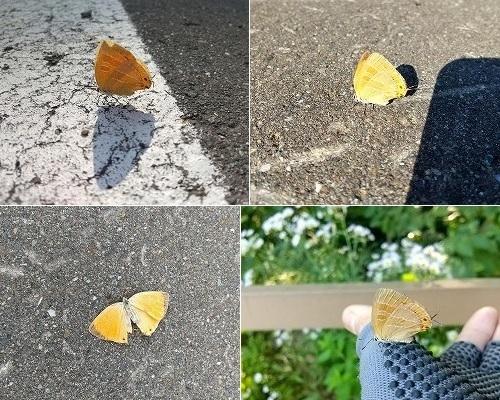 7月中旬の蝶とか_c0048117_11333621.jpg
