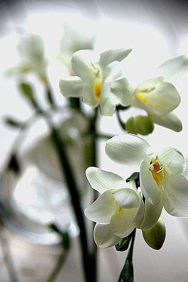 花より団子_e0131930_15221805.jpg
