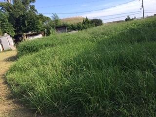 おやこ楽農くらぶの畑が危機です!_f0079749_17264936.jpg