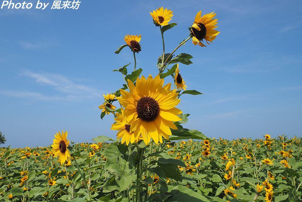 昨年8月に撮影したもの_d0358854_17523897.jpg