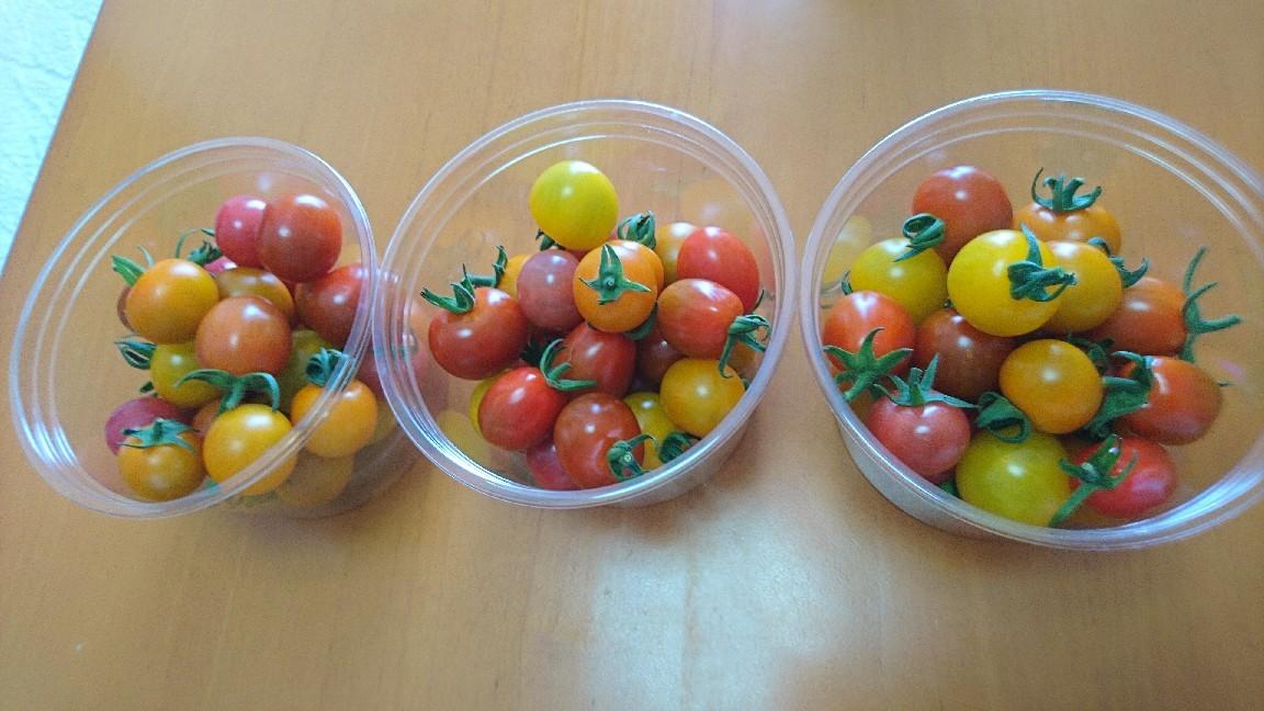 収穫、ミニトマト_b0106766_19512208.jpg