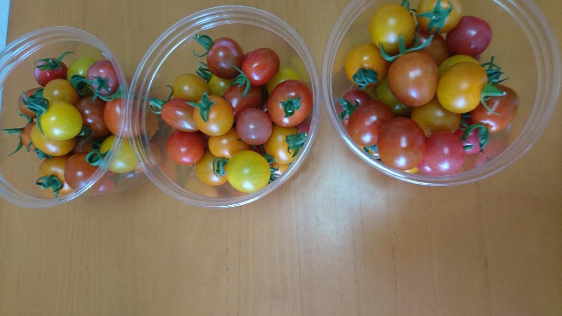 収穫、ミニトマト_b0106766_19512329.jpg
