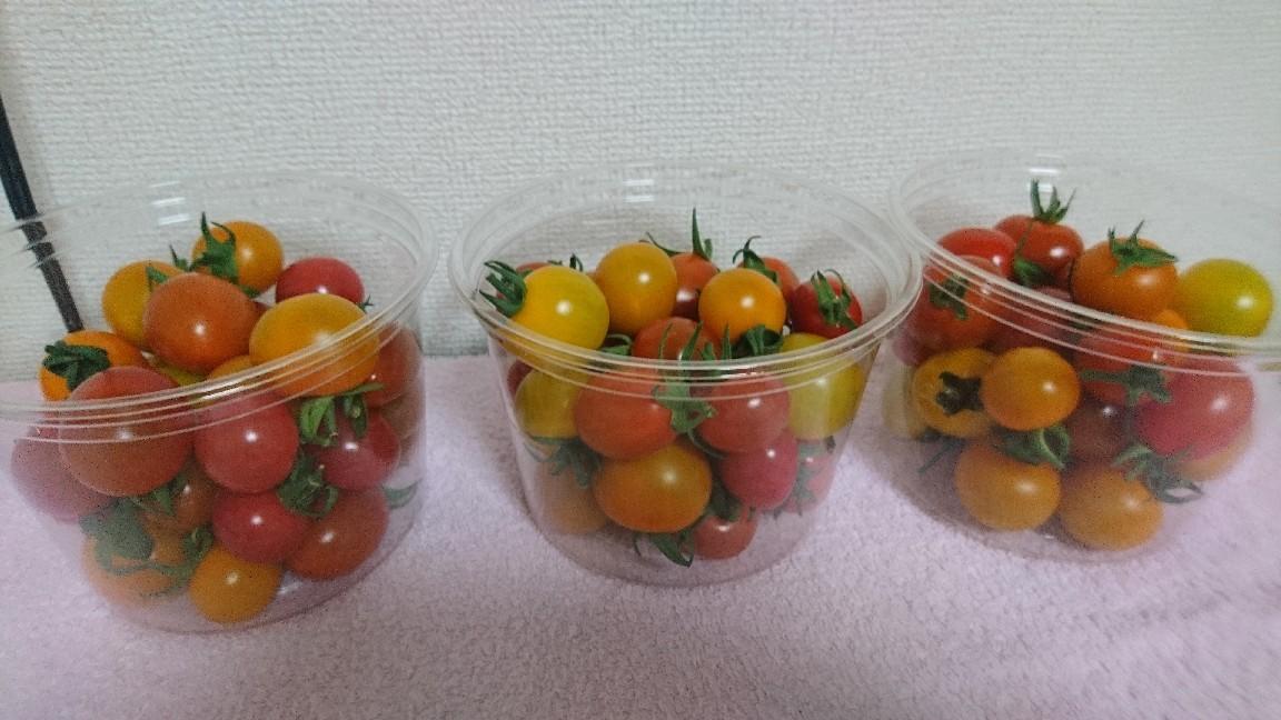 収穫、ミニトマト_b0106766_19513015.jpg