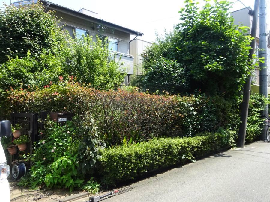 庭の手入れ_f0059673_16582856.jpg