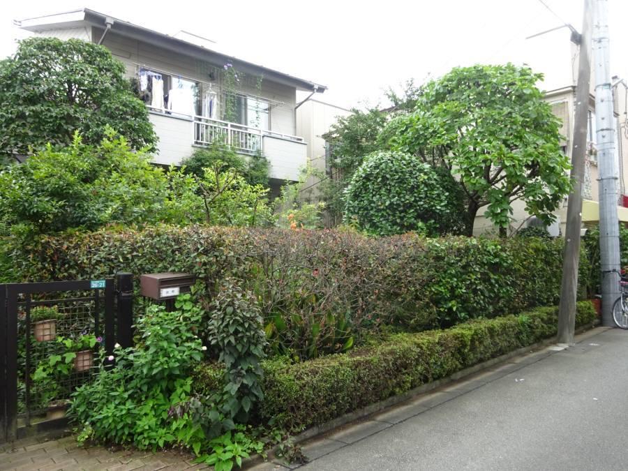 庭の手入れ_f0059673_16585295.jpg