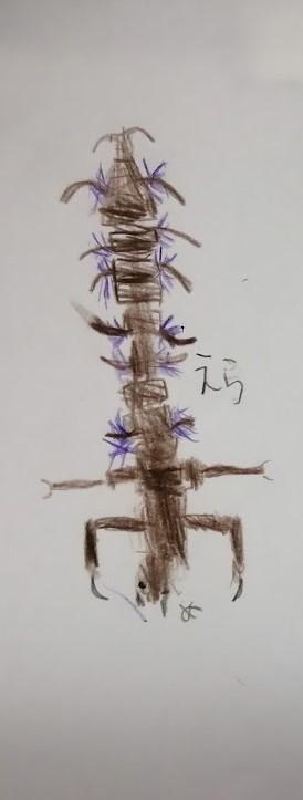 8/1(土) 月イチさんぽ ~水辺の生き物~ 開催しました!_f0212679_16210545.jpg