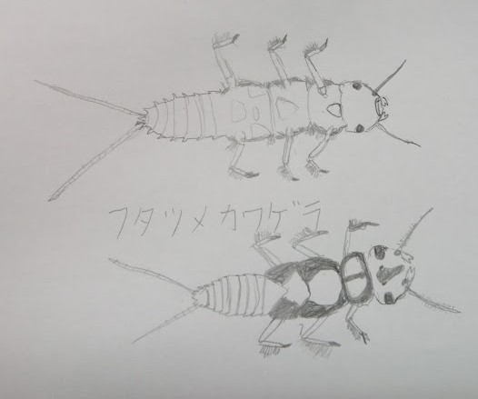 8/1(土) 月イチさんぽ ~水辺の生き物~ 開催しました!_f0212679_16210965.jpg