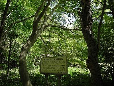 精進川・緑ヶ丘保安林・真駒内川を歩く(1)_f0078286_09584988.jpg