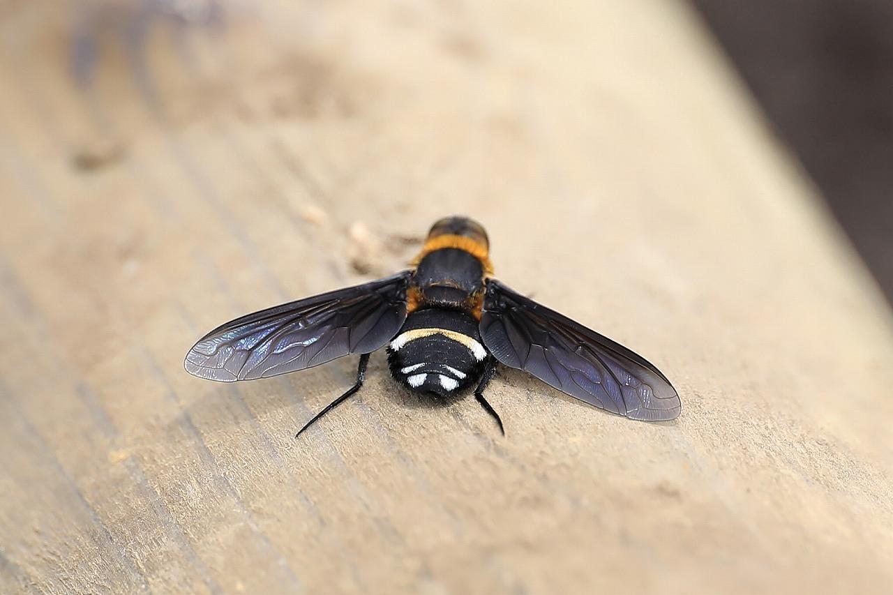昆虫色々_f0296999_19372048.jpg