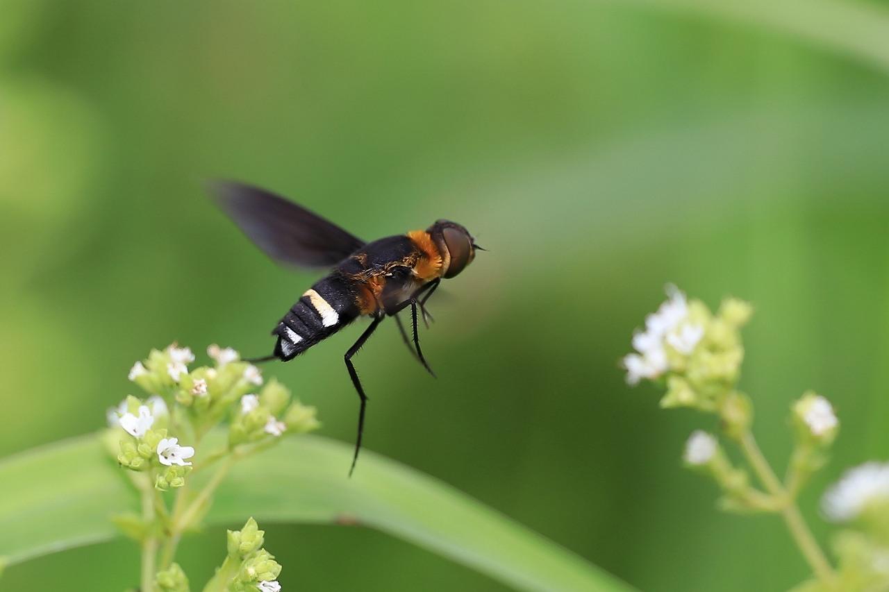 昆虫色々_f0296999_19372689.jpg