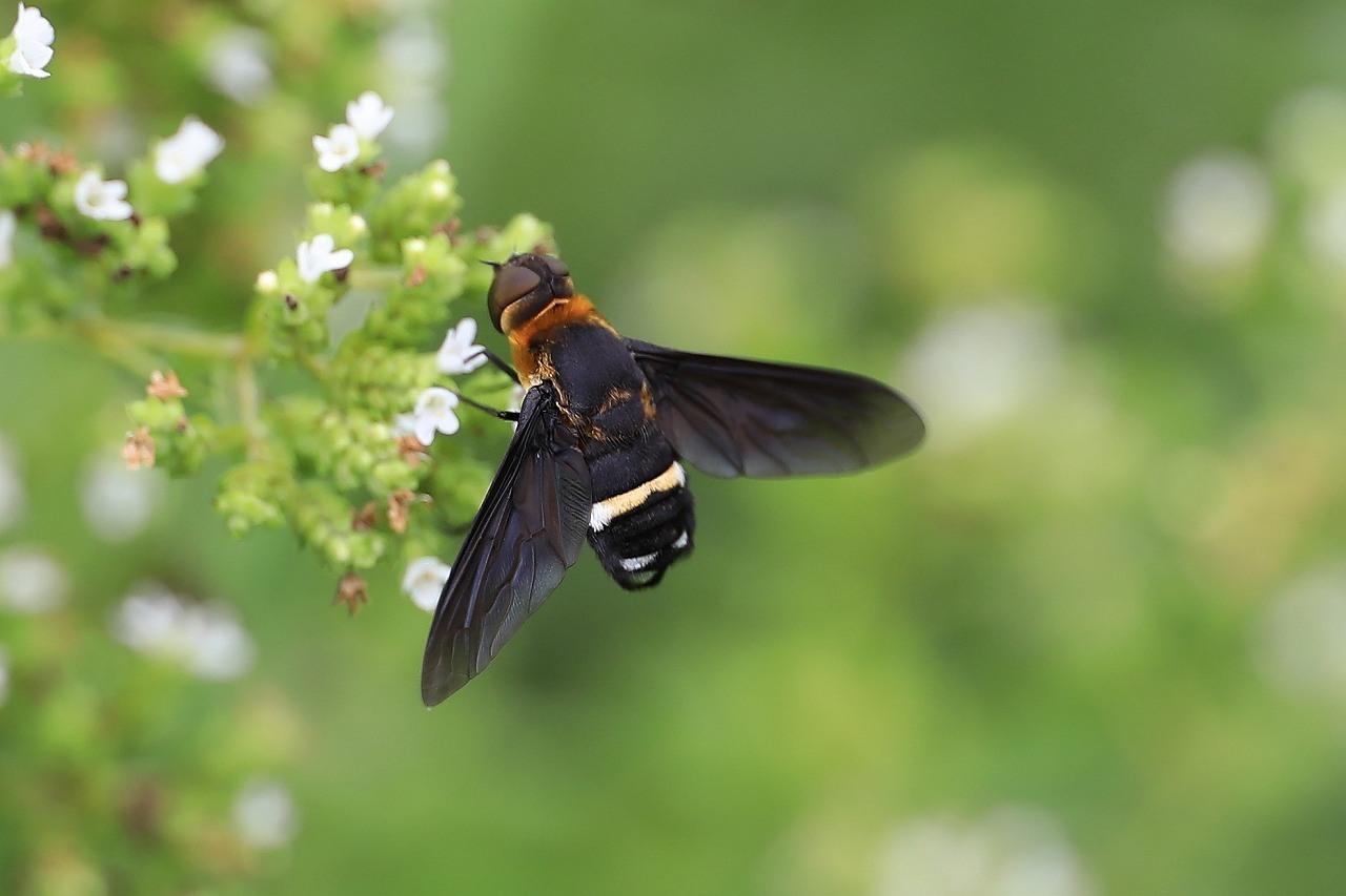 昆虫色々_f0296999_19374420.jpg