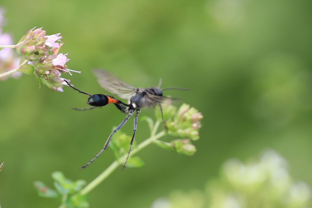 昆虫色々_f0296999_19395770.jpg